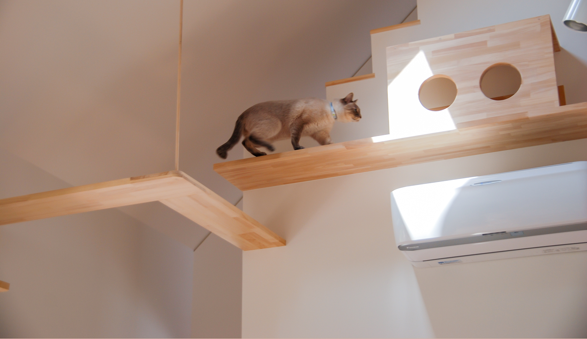 完全室内飼育「猫」の、住環境の質を高めるご提案。