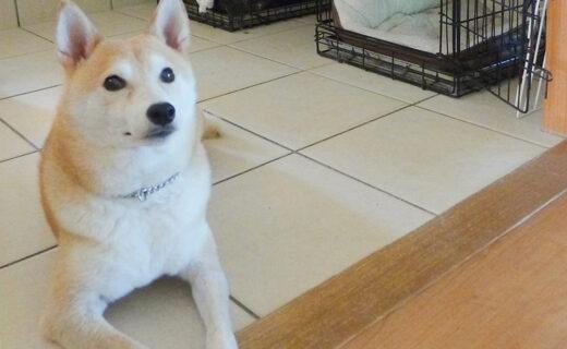 犬との住まいスペシャリスト資格認定講座